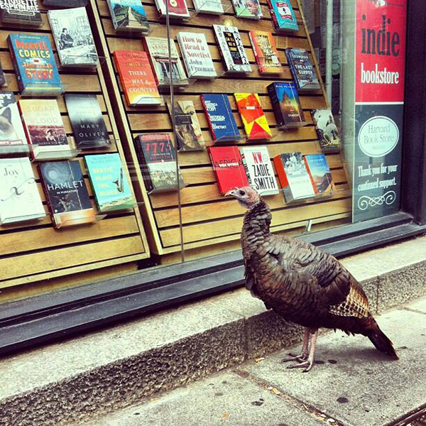 harvard book store harvard square turkey