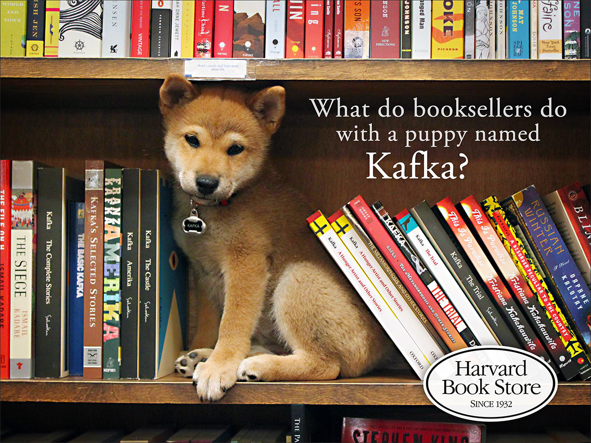 harvard book store kafka dog
