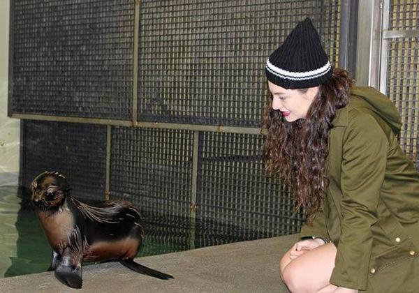 neaq lorde baby fur seal