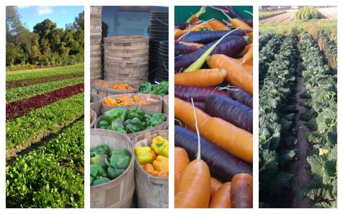 siena farms