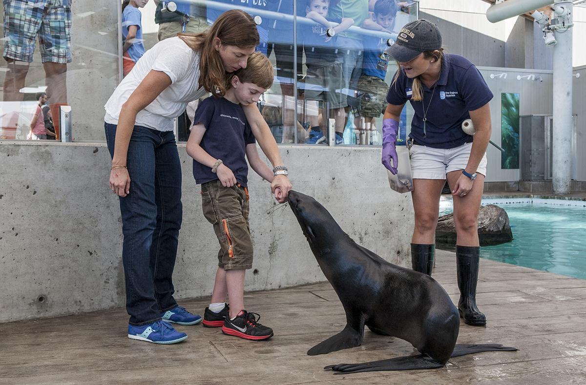 new england aquarium animal encounter