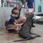 new england aquarium animal encounter