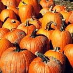 pumpkin-section-lede