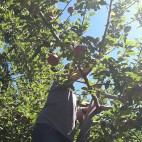 apple-picking-square