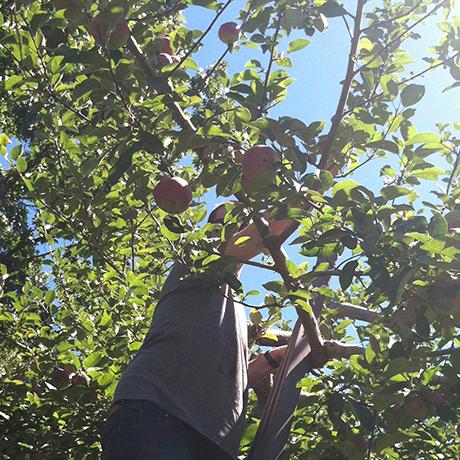 apple-picking-square