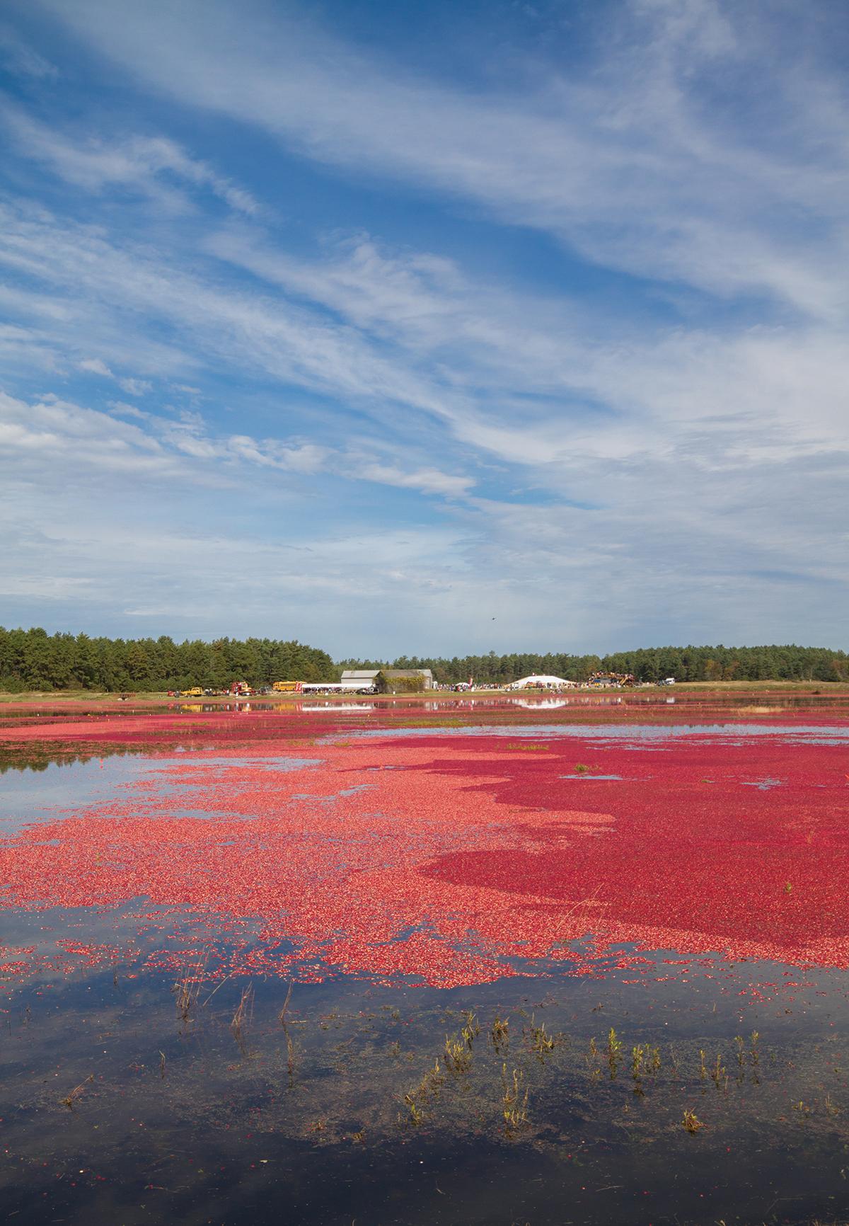 cranberry bog makepeace wareham ma