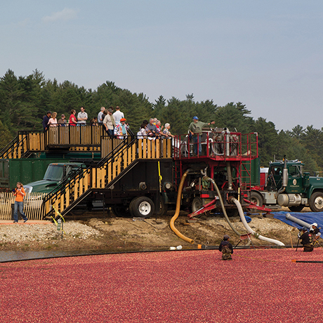 cranberry harvest celebration festival wareham ma sq