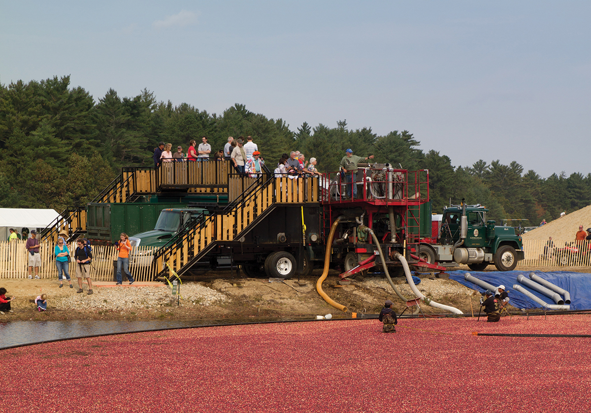 cranberry harvest celebration festival wareham ma