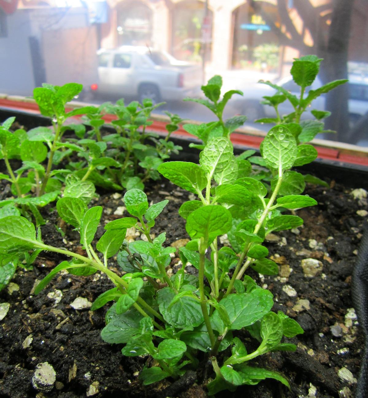 Tips For Indoor Gardening: Five Tips For Indoor Gardening This Winter