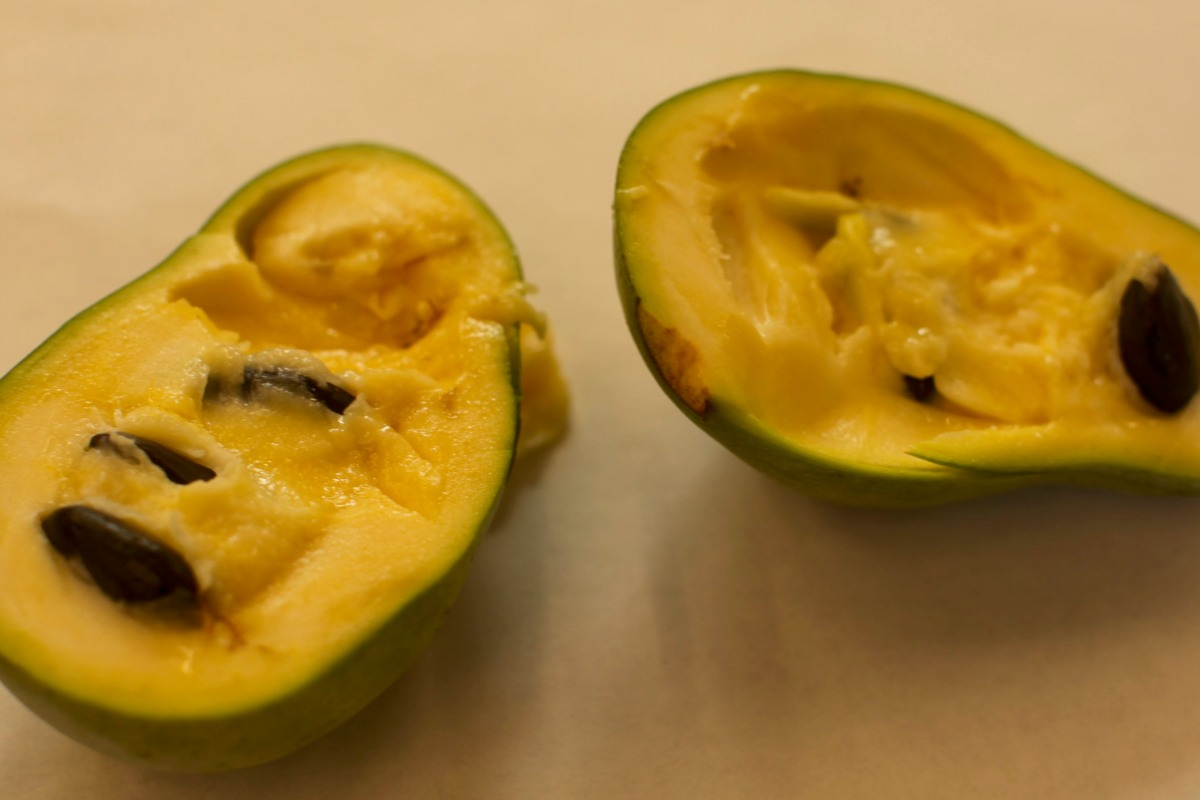 This rare tropical fruit secretly grows in Massachusetts.