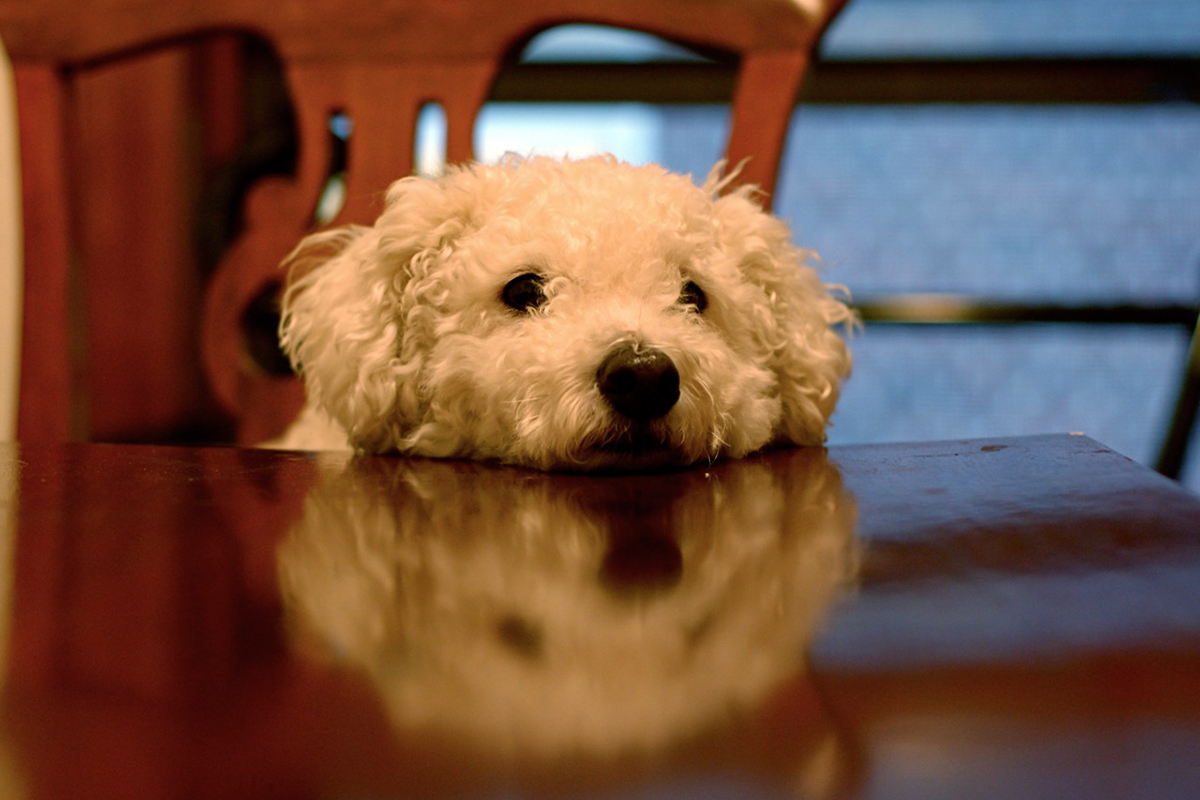 This dog is waiting for dinner. Photo by Ruthie Hansen/Flickr