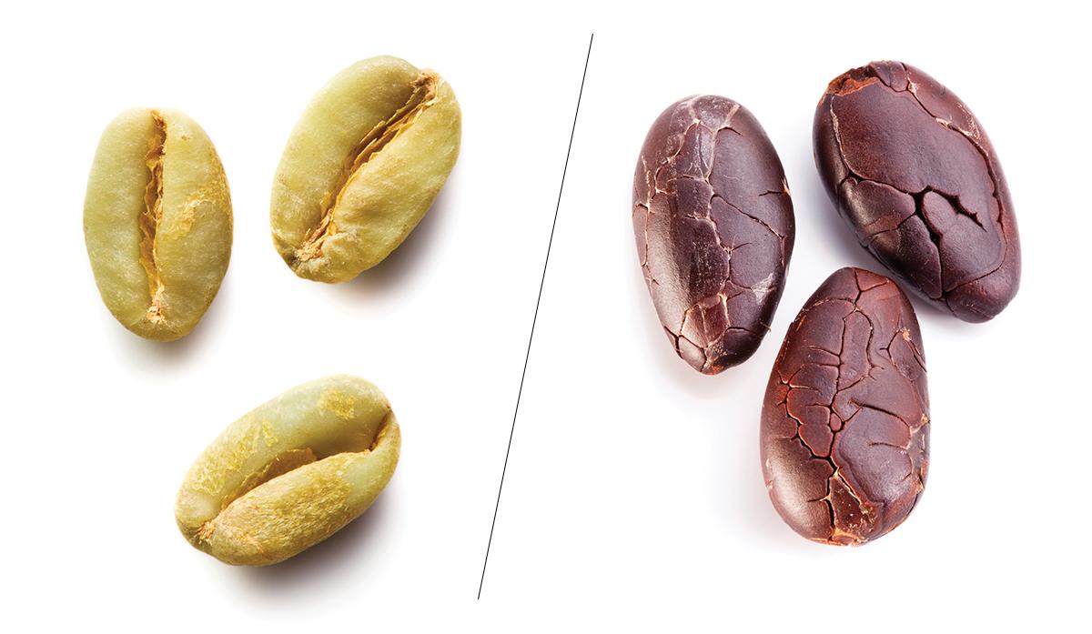 Fermenting Coffee Beans ~ Spilling the beans boston magazine