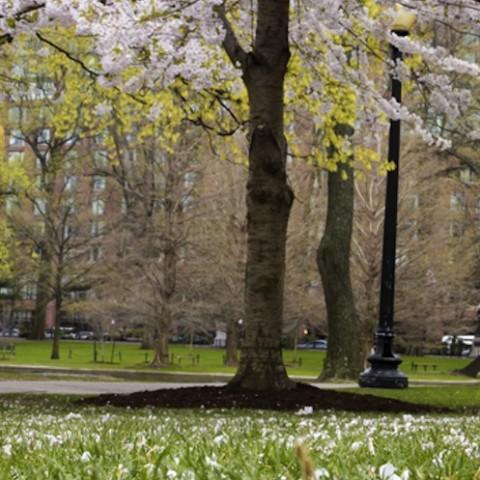 boston-spring