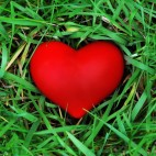 460 shutterstock red heart on the grass