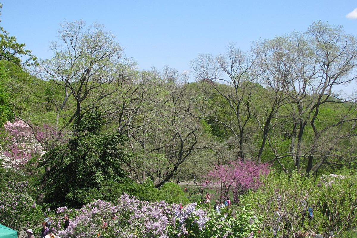 Arnold Arboretum photo via Flickr/Dave Rezendes