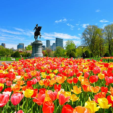 New Boston Public Garden App Offers Interactive Tours