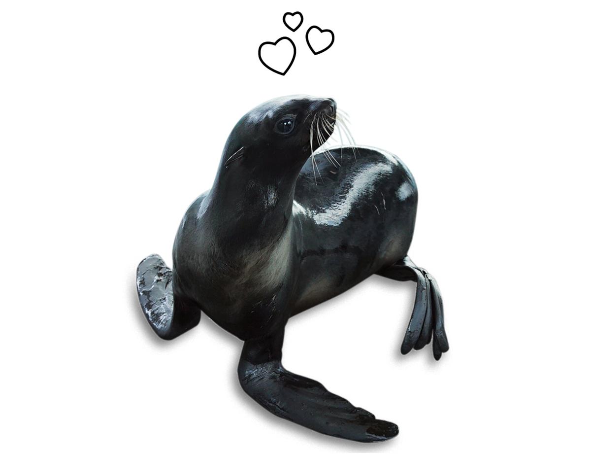 new england aquarium seals