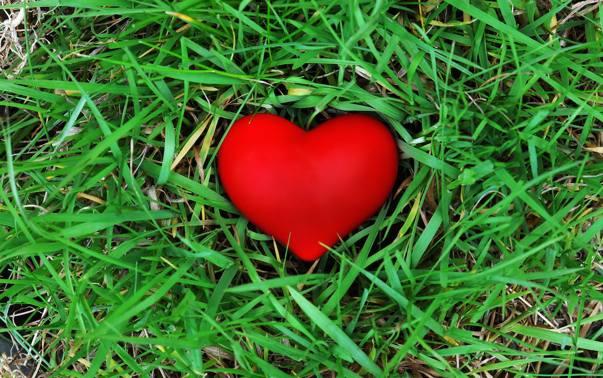 Red heart on the grass via Shutterstock