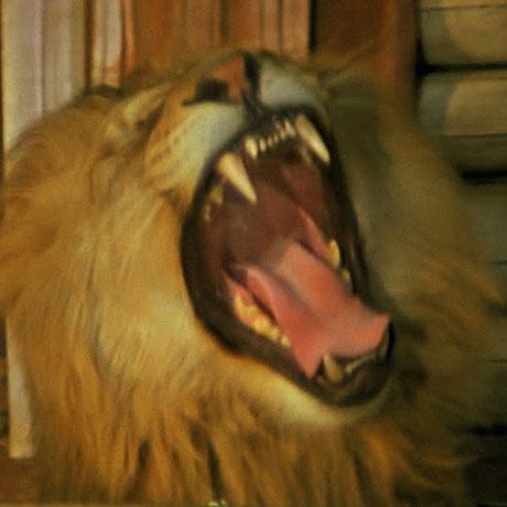 BOD_052615_Roar_small