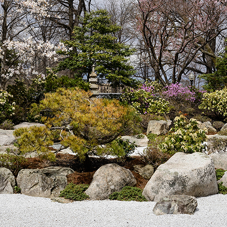 japan-garden-square