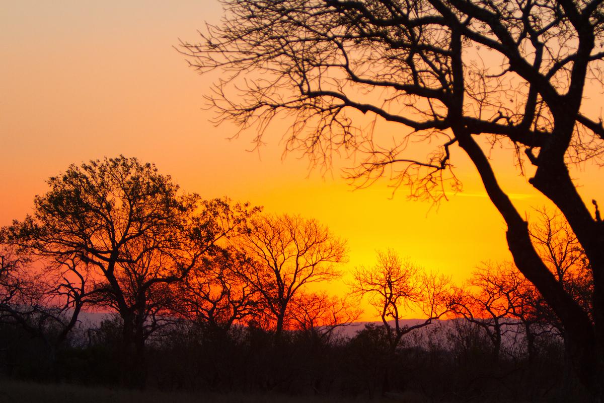 Londolozi Private Game Reserve/Photograph by McCrae Williams