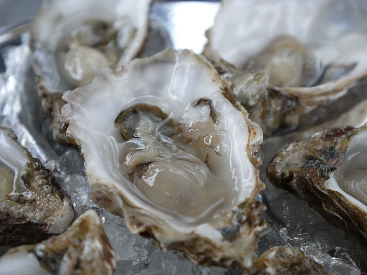 Dollar Oysters for National Oyster Day 2015