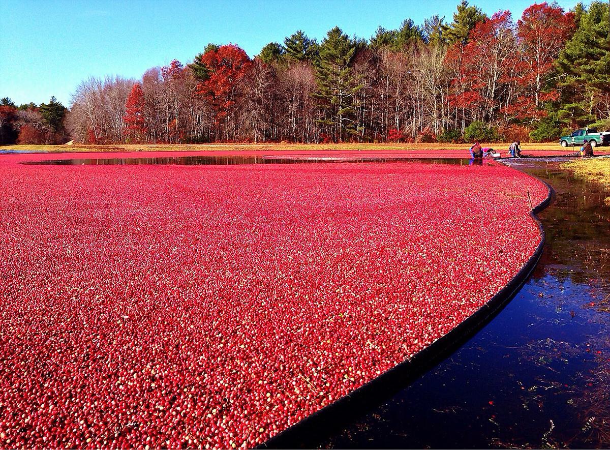 cranberry farmer job