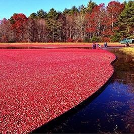 cranberry farmer