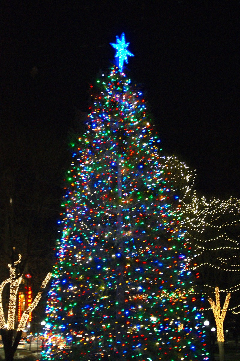 boston common tree lighting 2015