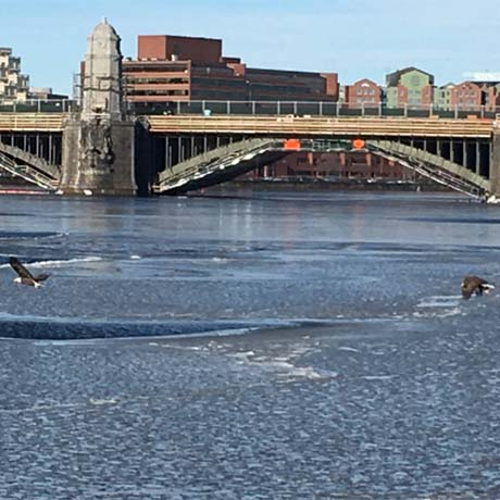 Charles River eagles square