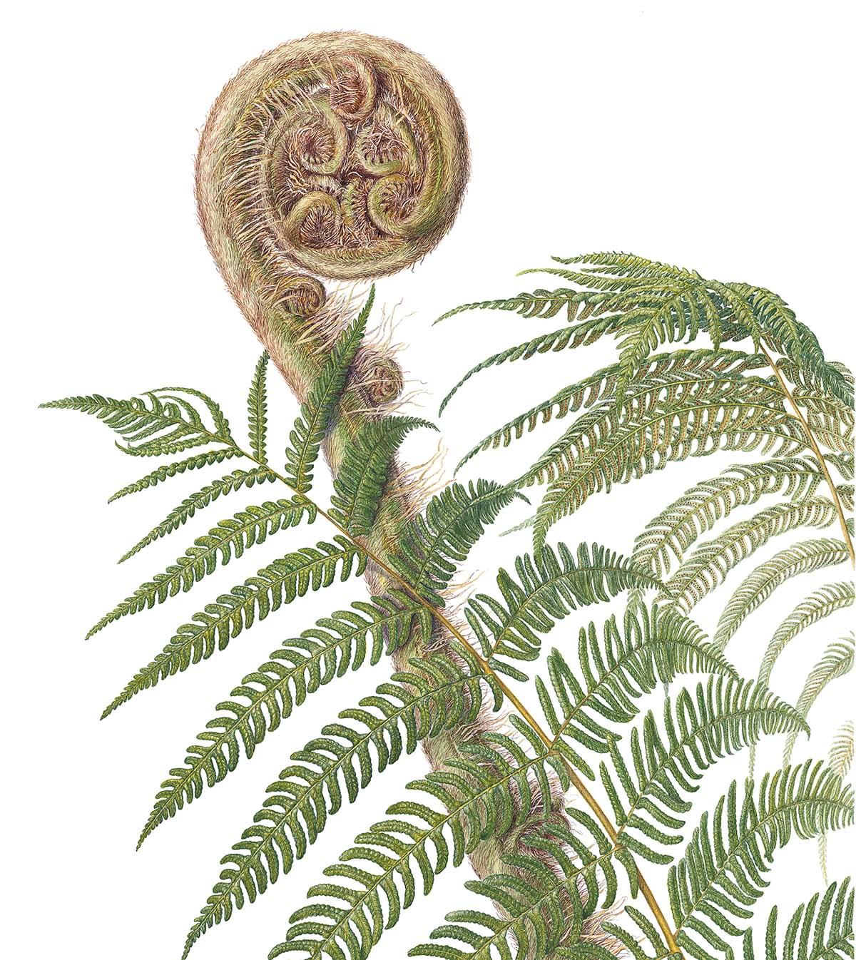 mass hort Florilegium