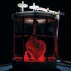 pig-heart-sq