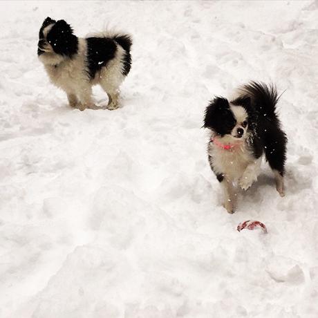 somerville-stolen-dogssquare