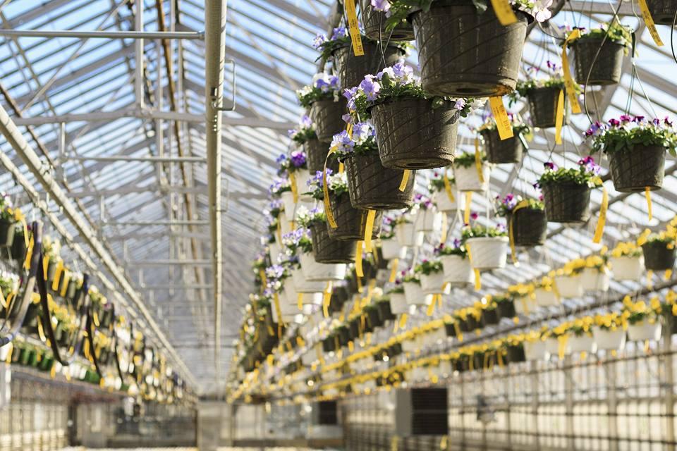 Five Nurseries Near Boston To Buy Your Plants