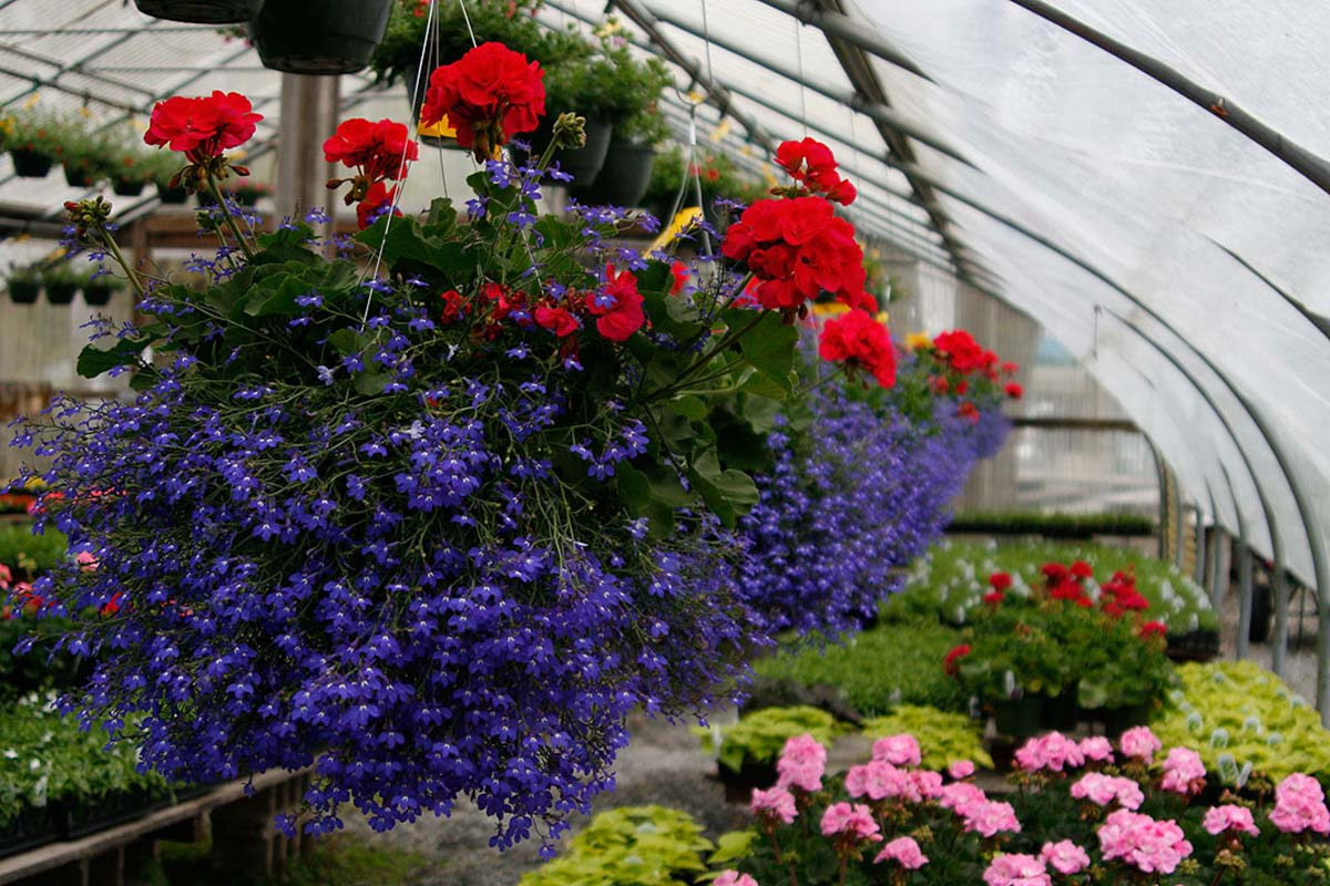 Five Nurseries Near Boston To Buy Your Plants