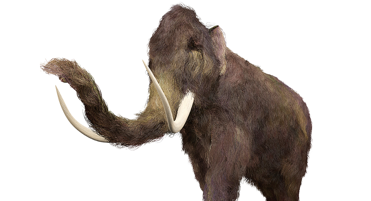 Bring Back the Woolly Mammoth!
