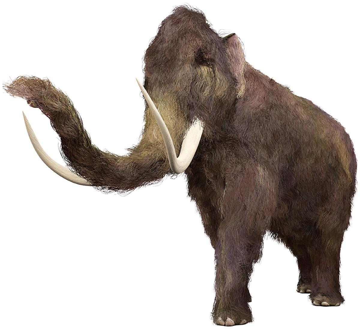 CRISPR-Cas9 woolly mammoth