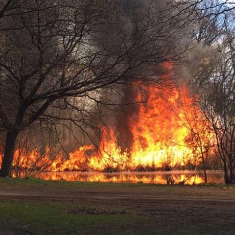 Fenway brush fire