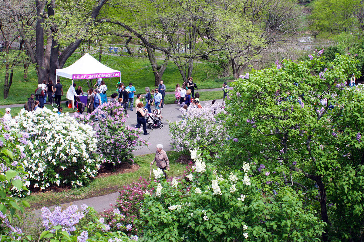 Lilac Sunday at the Arnold Arboretum of Harvard University