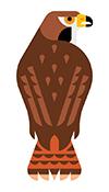 boston harbor islands guide bird 2