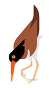 boston harbor islands guide bird 3