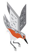 boston harbor islands guide bird 5