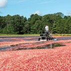 ocean spray cranberries sq