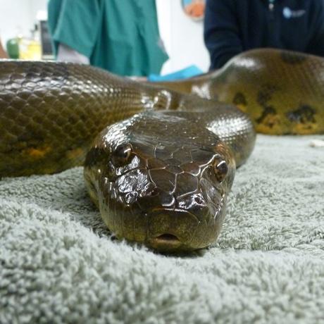 anaconda sq