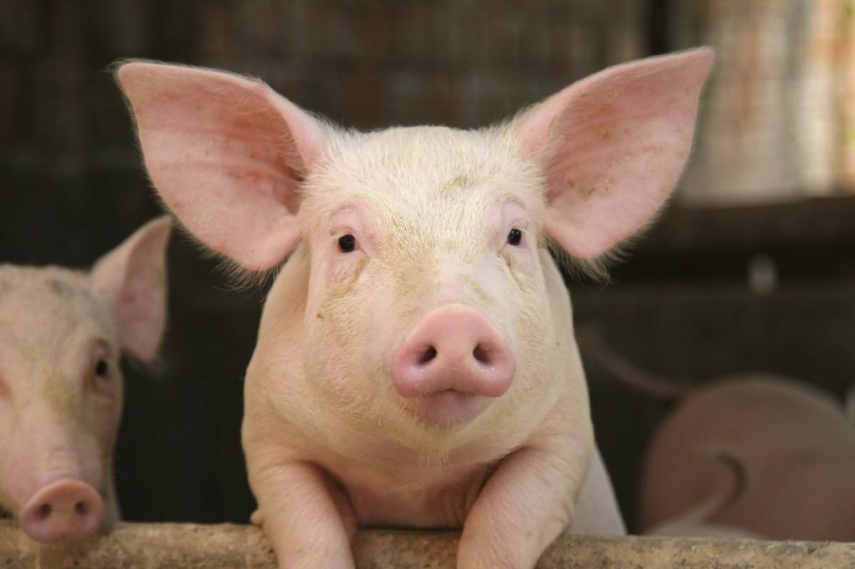 massachusetts question 3 animal rights