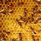 inside beehive