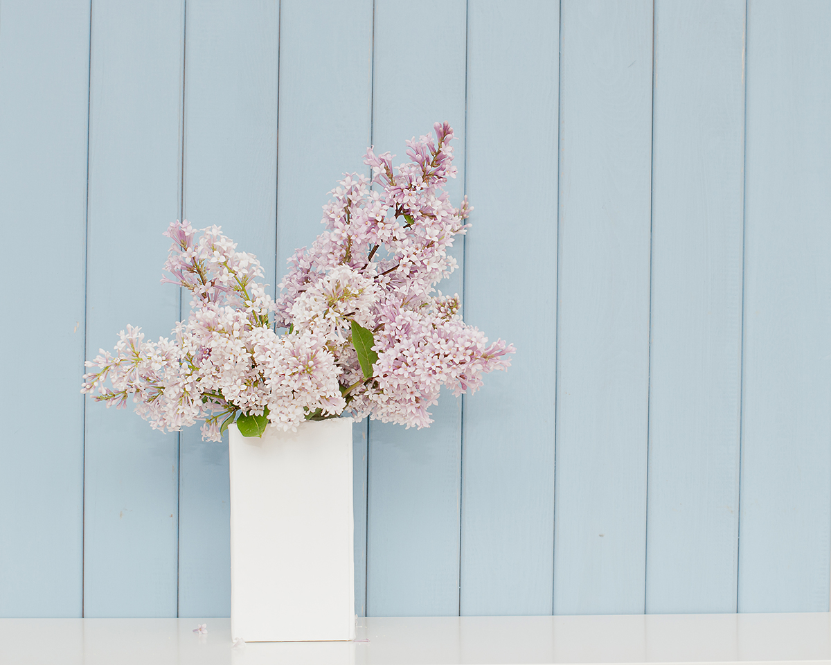 chivalrous flowers