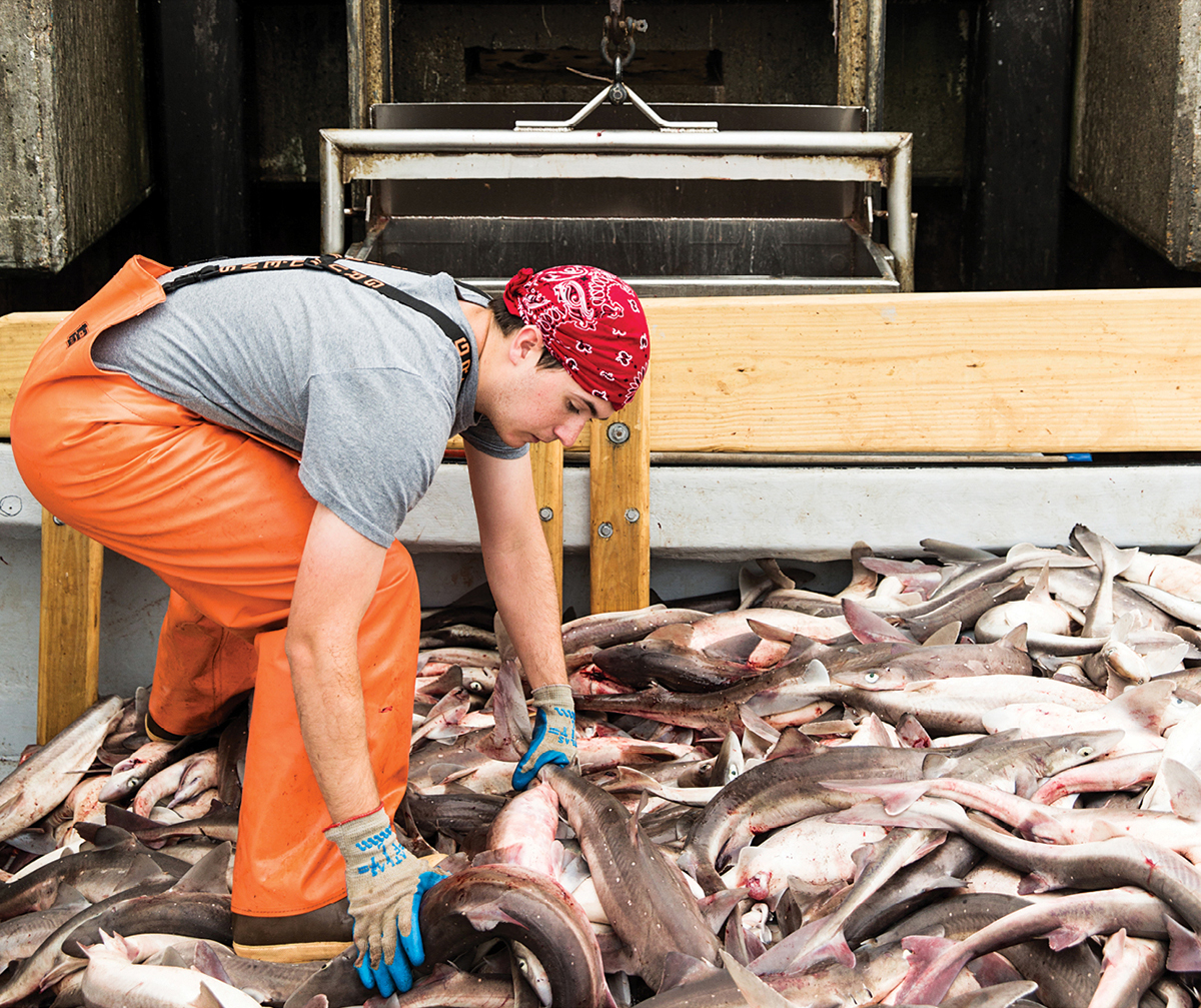 mitchell kelleher chatham dogfish 3