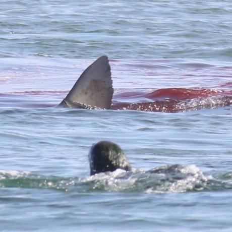 shark seal 3 square