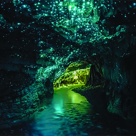 Waitomo Glowworm Caves square